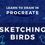 Learn to Draw in Procreate // Sketching Birds