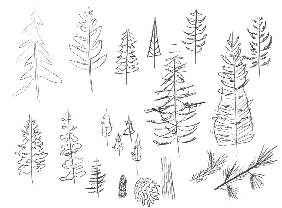 These are my tree sketches