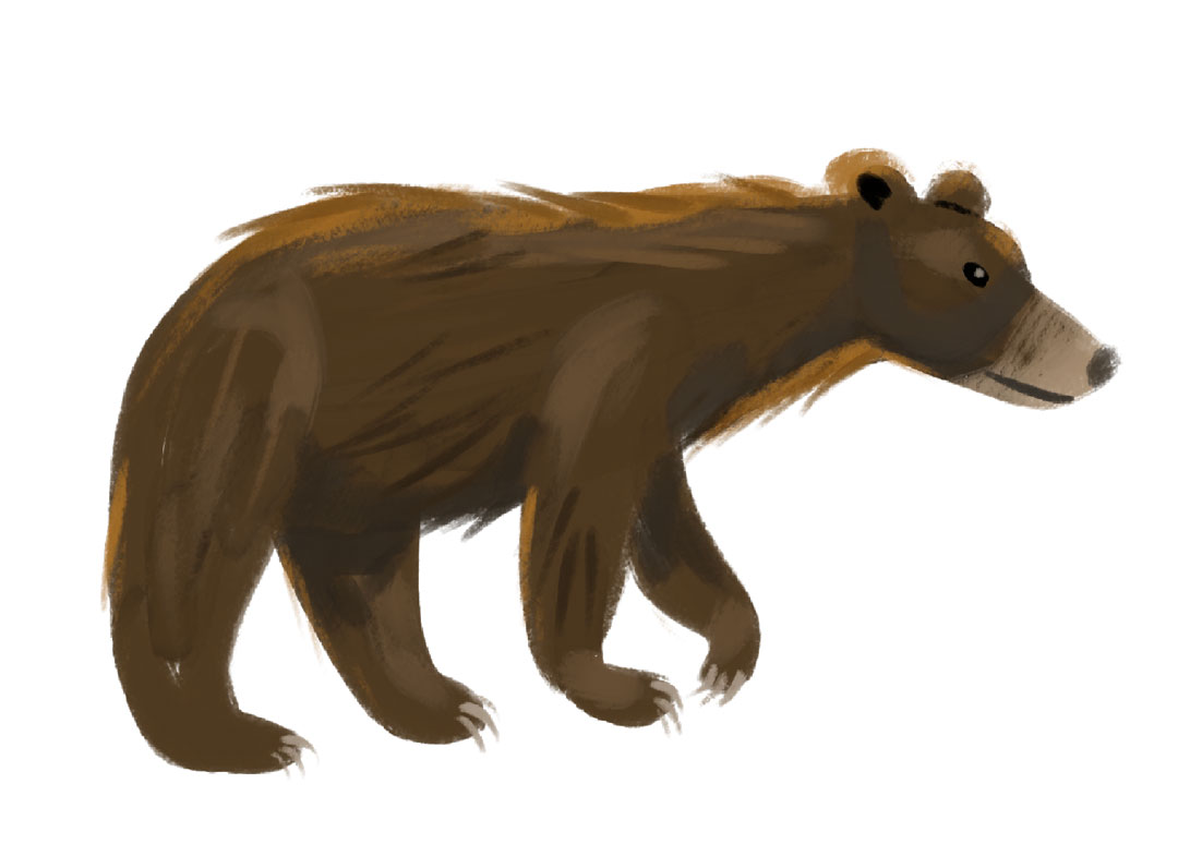 Black Bear (they look pretty brown there!)