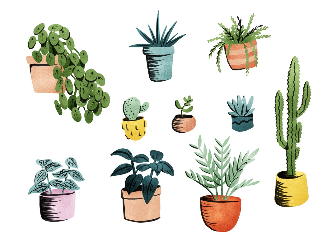 Fully colored plant studies. It was a challenge trying to figure out where to place the black lines!