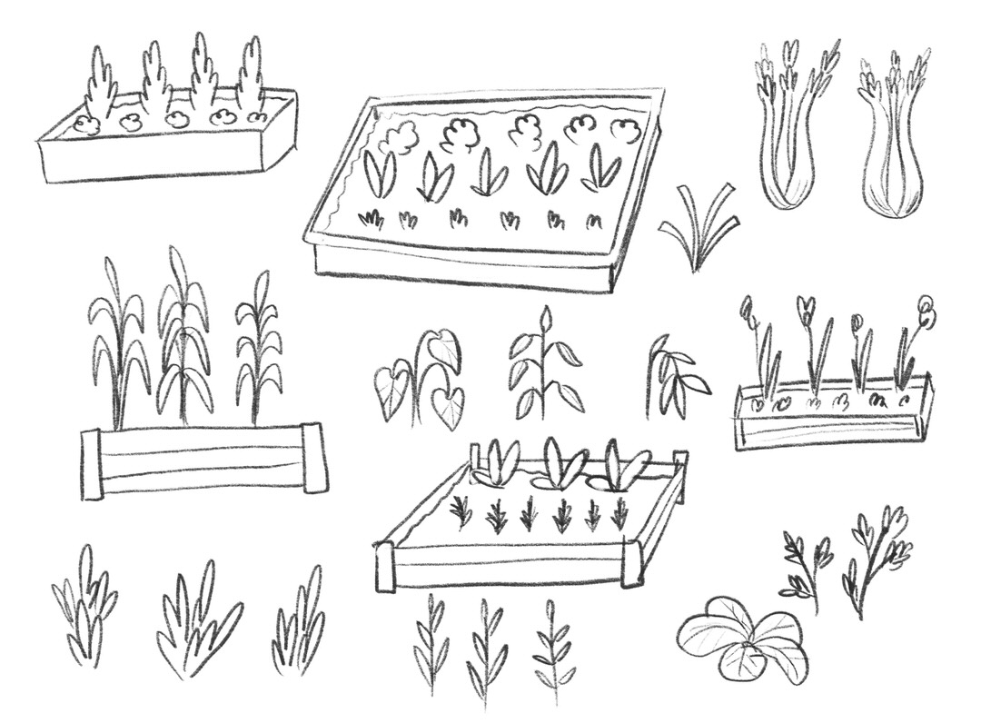 Sketch page of raised planter beds and garden crops