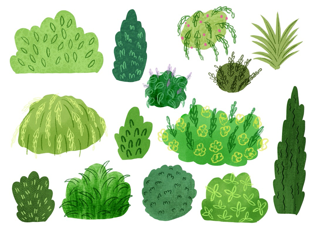 Some final shrub style ideas! I can see a few that I really like and will use in my final piece.