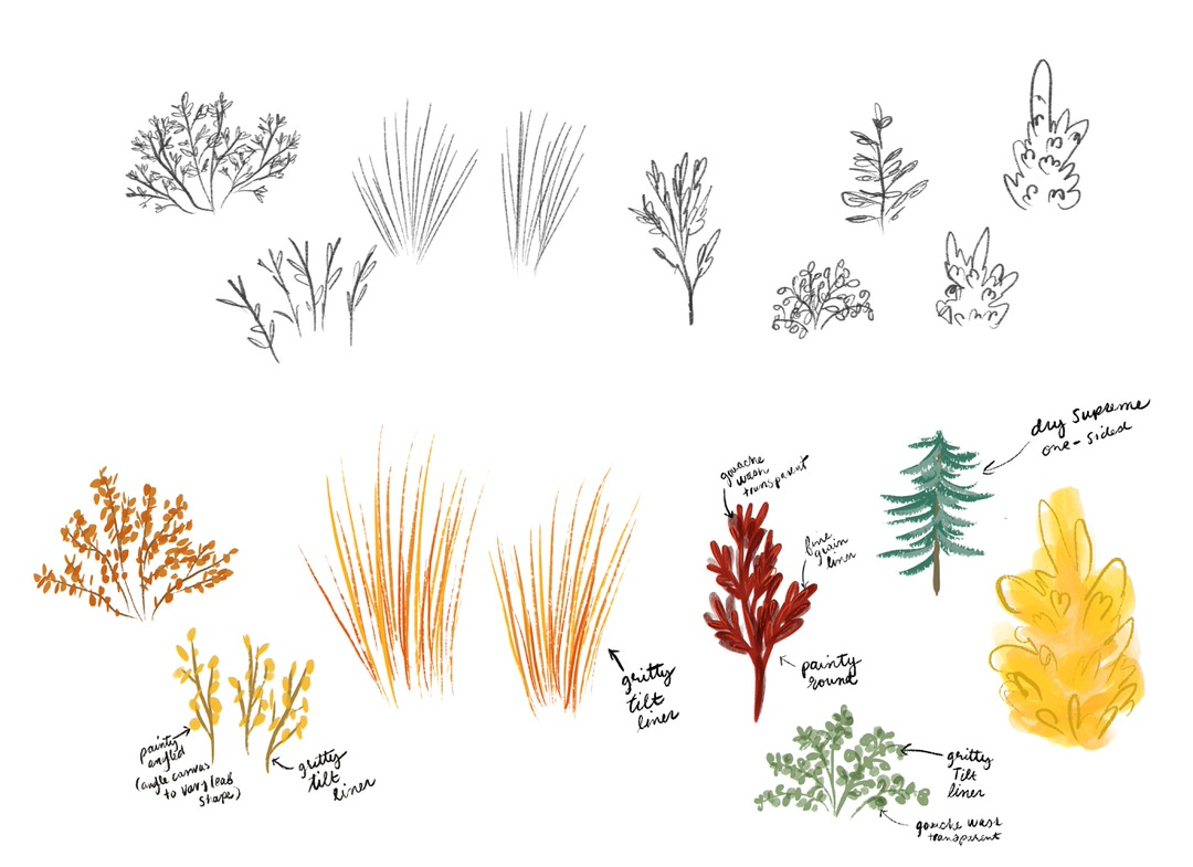 My sketches and color studies for my scene's plants