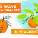 Two Ways to Draw Oranges in Procreate